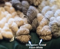 Photo of Champion Tweed Dark Fawn and White