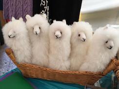Photo of Stuffed Alpaca