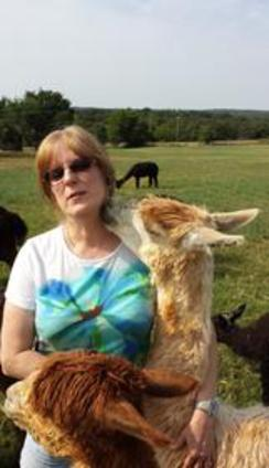 Getting lots of kisses from Charlotte, our Suri alpaca