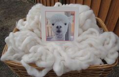 Photo of  White Baby Alpaca Roving 4.4 Oz.