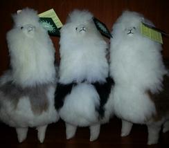 """Photo of Alpaca Stuffed Animal - 12"""" Multi"""