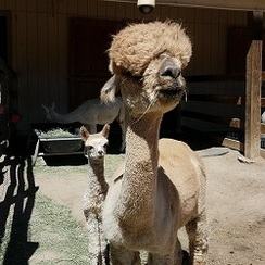 Cover Girl and 2017 cria