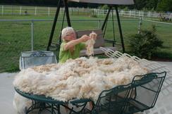 Vickie Skirting a Fleece