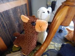 Photo of Stuffed Alpacas
