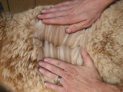 Gorgeous, silky alpaca fiber!