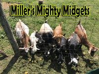 Miller's Mighty Midgets - Logo