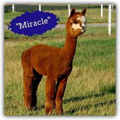 Miracle (Boy)