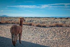Wyatt gazing at the horizon.