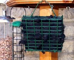 Photo of Bird's Nest Fiber