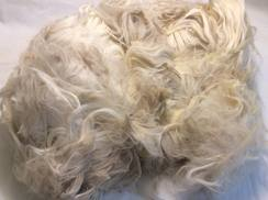 Photo of Alpaca~Raw Fiber~Suri~Fiber~Regina