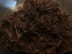 Photo of Alpaca Raw Fiber~Washed Suri~Mojolica