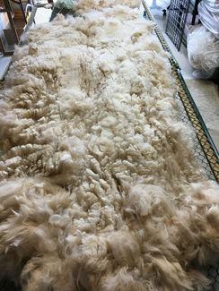 Photo of Raw: Alpaca fiber~Thomas