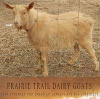 Prairie Trail Saanens-Zehavi Guernseys - Logo