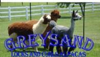 Greysand Alpacas - Logo