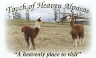 Touch of Heaven Alpacas - Logo