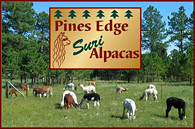 PINES EDGE SURI ALPACAS - Logo