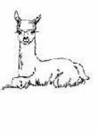Alpacas of Sunset Farm - Logo