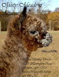 Misty Meadows Alpacas - Logo