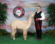 Photo of Alpaca Palace's King Louis XIII