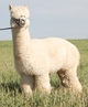 Photo of Mile High Peruvian Carlton Ritz