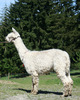 Photo of NGG ACCOYO FORTUNE BY ENOLA GAY