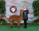 Photo of Alpaca Palace Houdini's Prince Harry