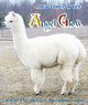 Photo of FDD ACCOYO COMET'S ANGEL GLOW