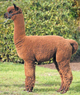 Photo of A.L. PACA'S EXCLUSIVO