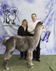 Photo of Alpacaworks Zia Diamante