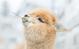 It's Time We Appreciate The Alpaca