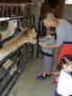 Silverhill alpaca farm hosts fourth Family Farm Day