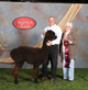 Photo of ODF Magic's Bewitched- Sold
