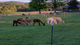 A Slice of Heaven Alpacas & Simply Natural Alpaca Gift Shop