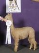 Photo of Eldora's Cameo
