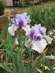 Don't forget the lovely Iris
