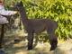 Photo of Starshire's Samara