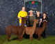 Photo of  Colored Breedings Futurity Herdsire of the Year Genetics