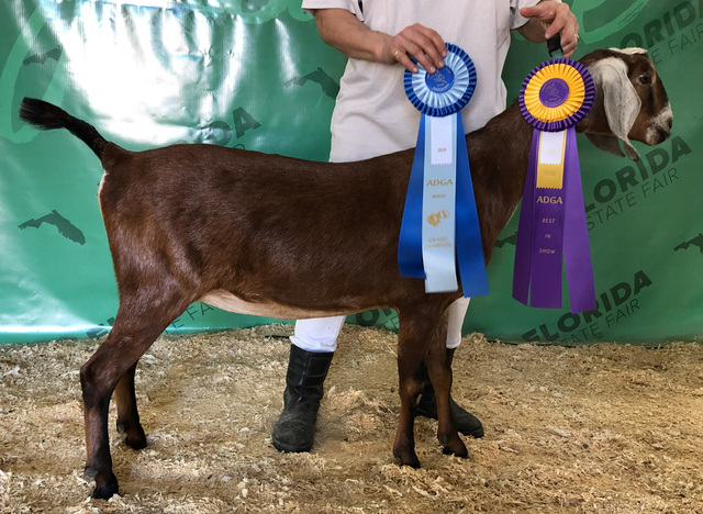 Addison with her ribbons at FL State Fair 2020