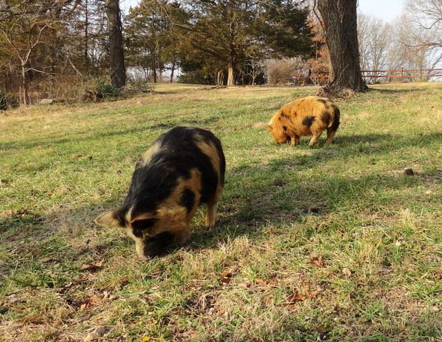 Trisha (R) & Franklin (L)