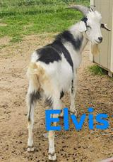 Photo of LNH ELVIS