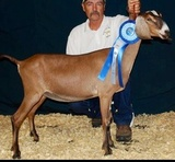 2014 dry yearling