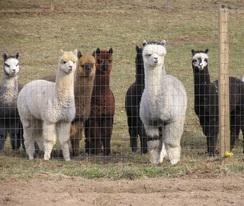Photo of Healthy Herd Part 1 Registration