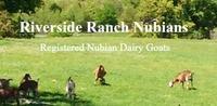 Riverside Ranch - Logo