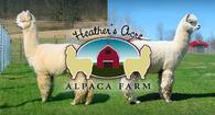 Heather's Acre Alpaca Farm - Logo