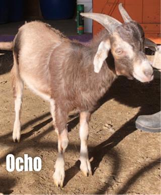 Photo of Ocho