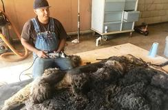 Harlequin/Appaloosa raw fleece