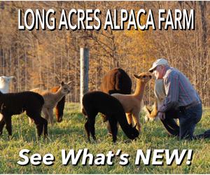 alpacas for sale