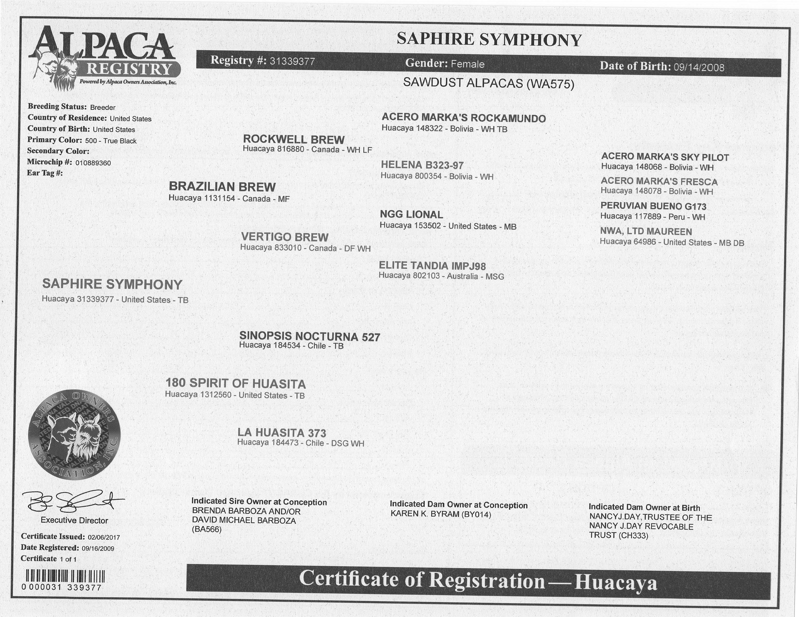 Alpacas For Sale Saphire Symphony Huacaya Female Proven Nevada