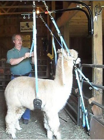 Openherd: The AlpacaRosa - Alpaca product and service ... Receiver Person