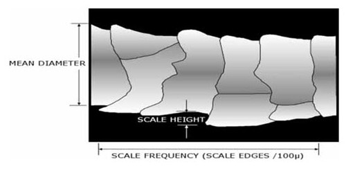 Scale Height